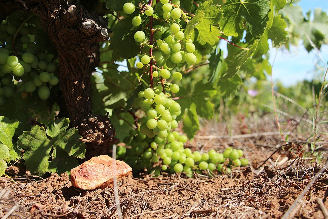 Itata grapes and rocks