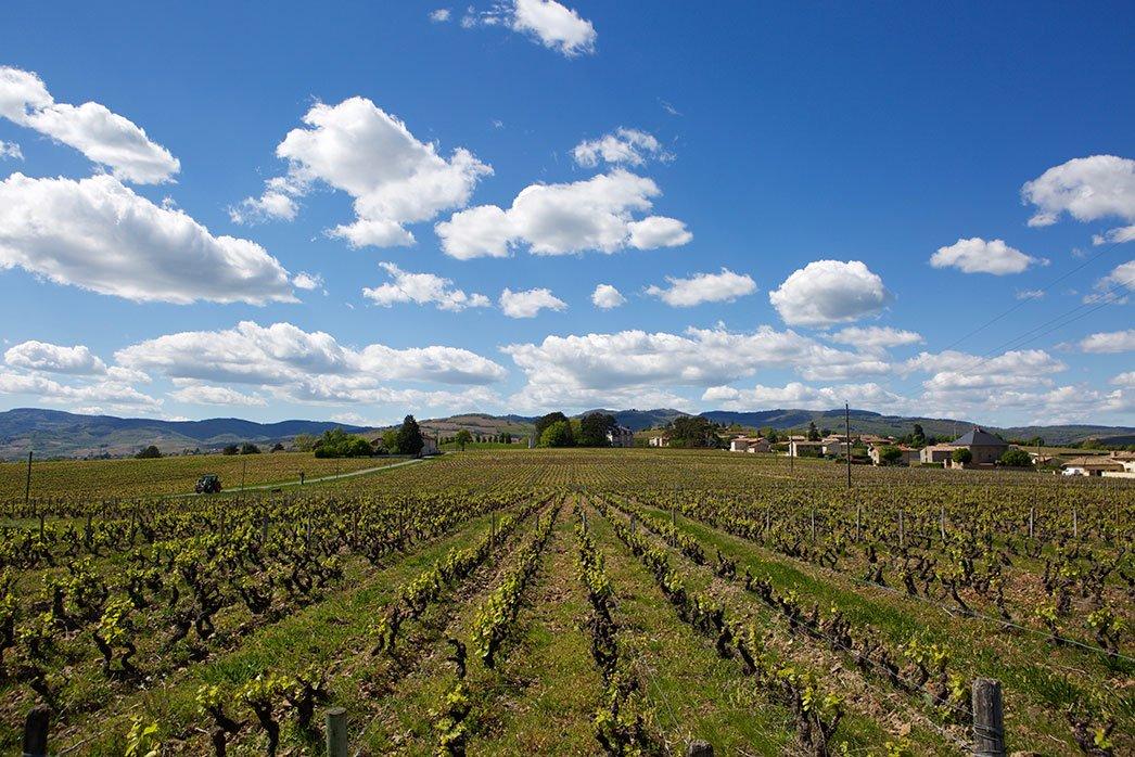 Chardigny vineyards