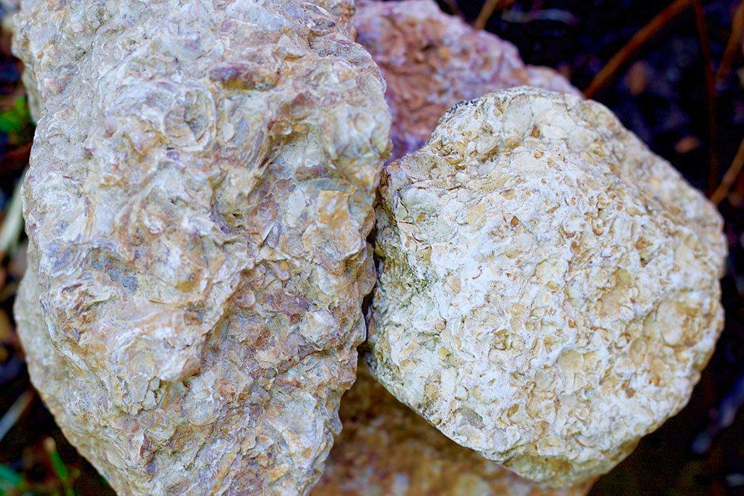 Kimmeridgian Rocks