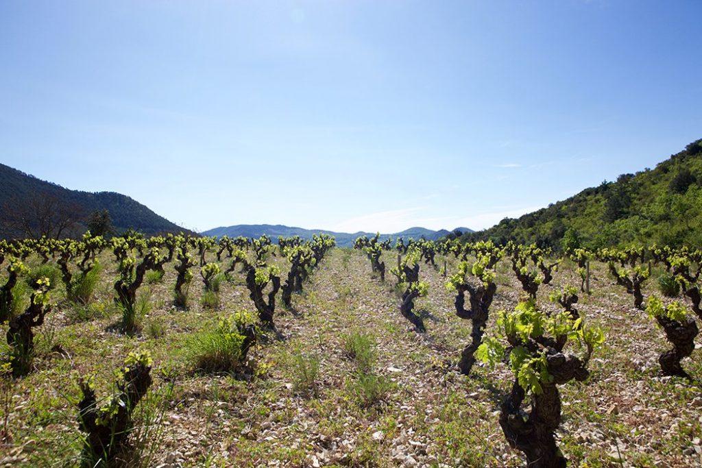 Pas de l Escalette Vineyard