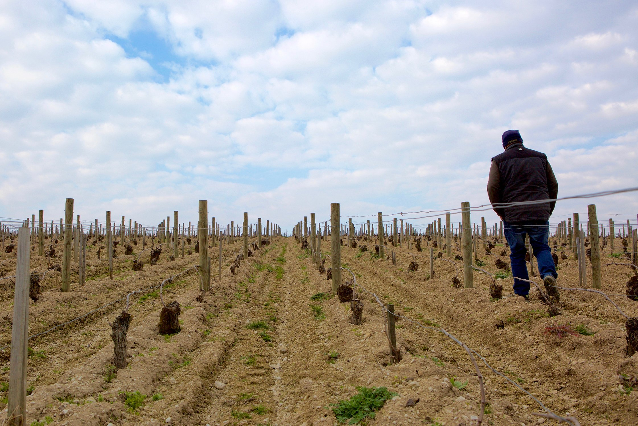 François Crochet walking through his vineyards in Sancerre
