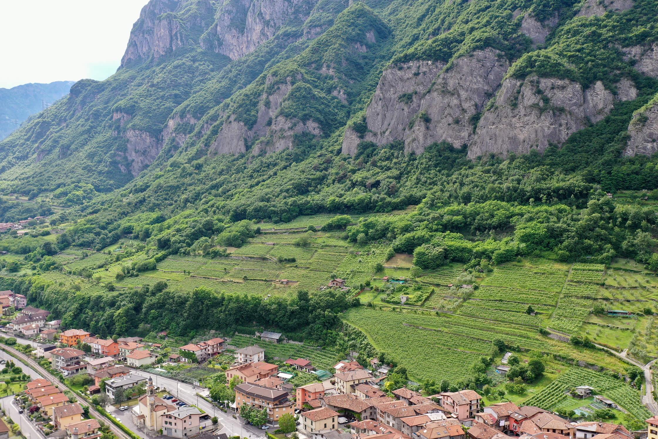 Enrico Togni vineyards